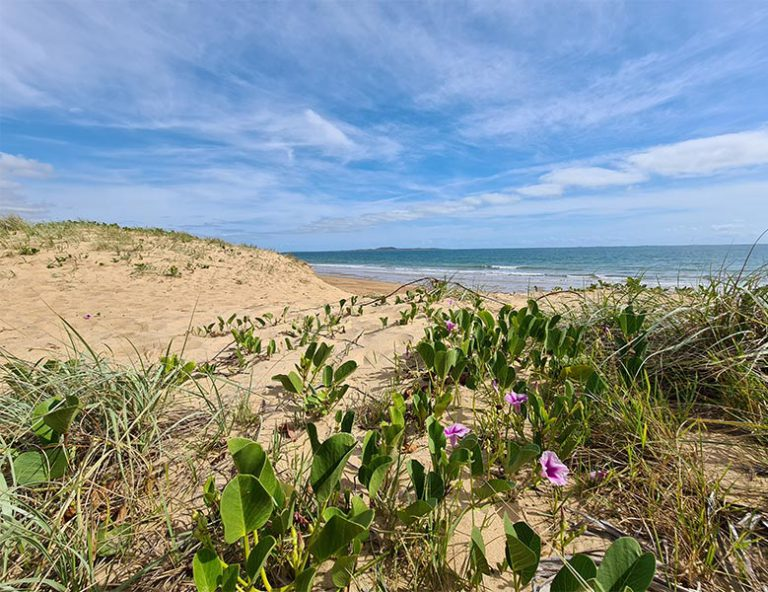 Sandy dune with purple flower and ocean in the distance
